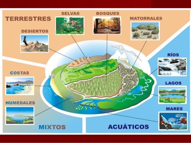 Resultado de imagen de ecosistemas tipos