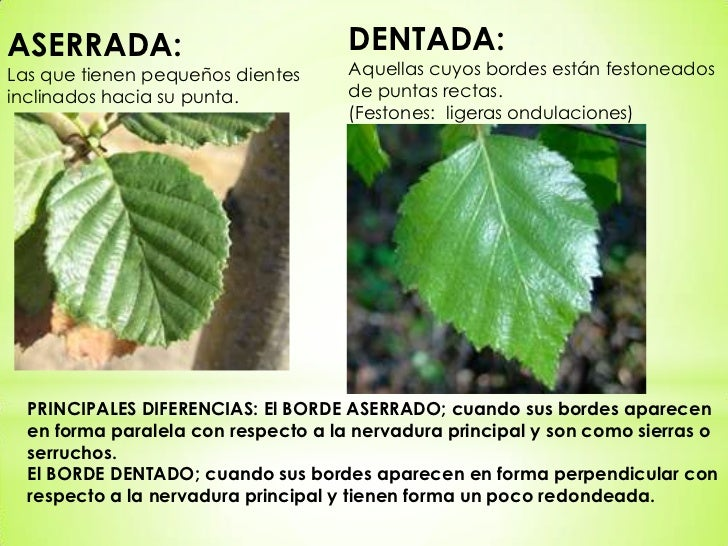 Tipos de hojas for Hojas ornamentales con sus nombres