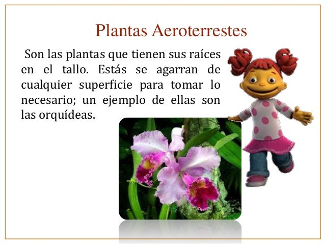plantas aeroterrestes son las plantas que tienen sus raíces en