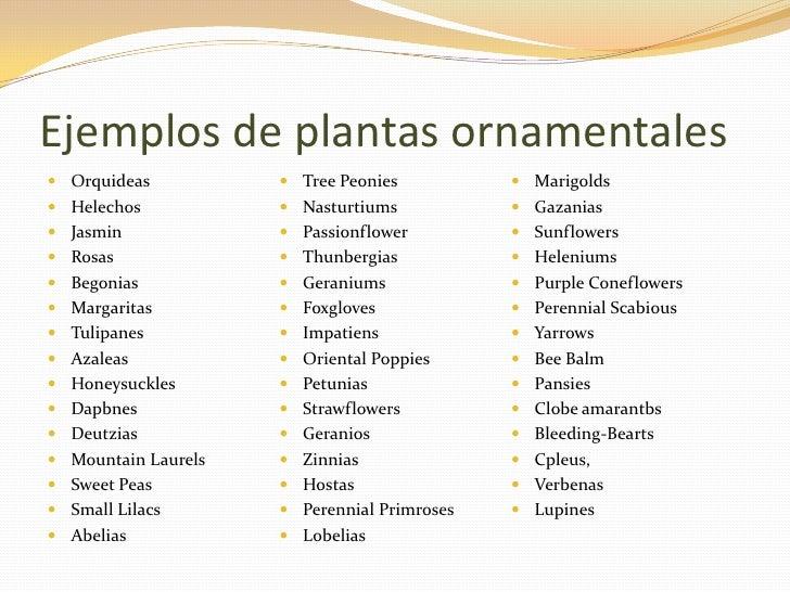 Cuales son plantas ornamentales  Imagui