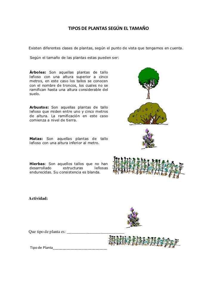 TIPOS DE PLANTAS SEGÚN EL TAMAÑO Existen diferentes clases de