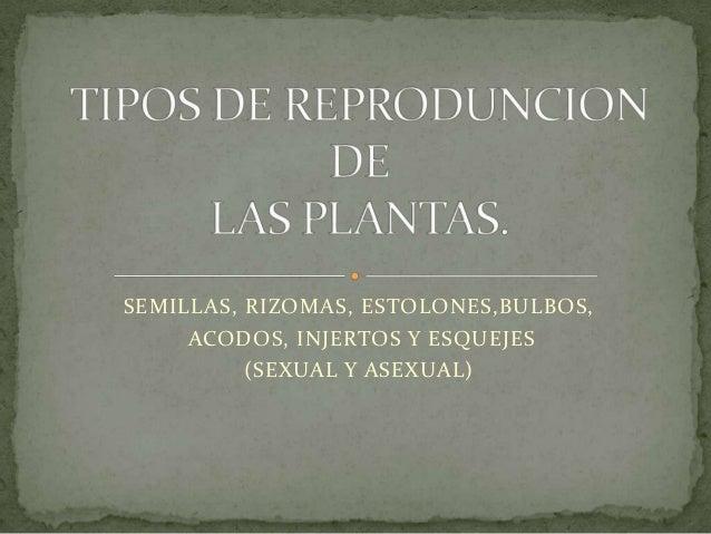 Tipos de reproduncion