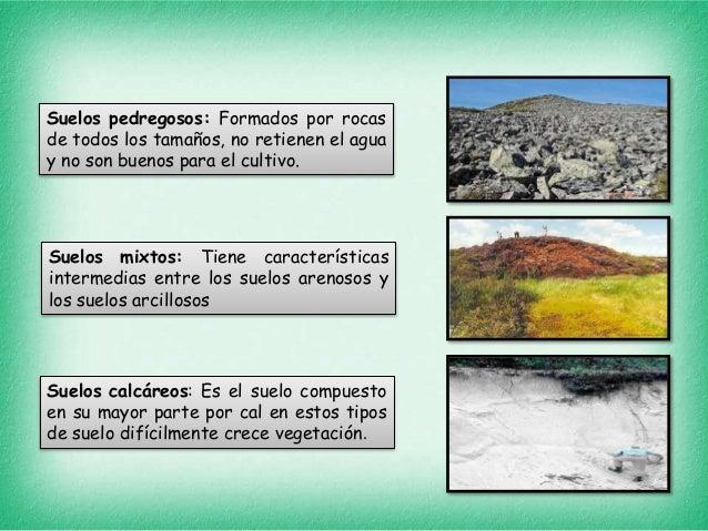 tipos de suelos y plantas On el suelo y sus tipos