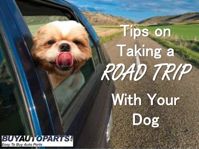 Tips on Taking a ROAD TRIP With Your Dog
