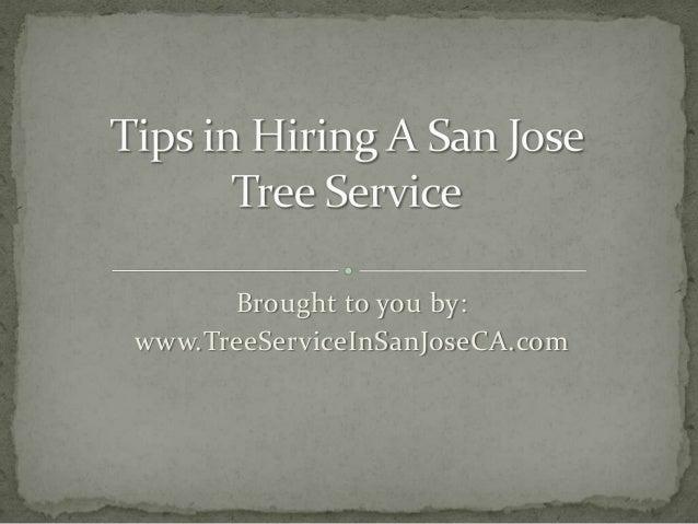Tips in Hiring A San Jose Tree Service