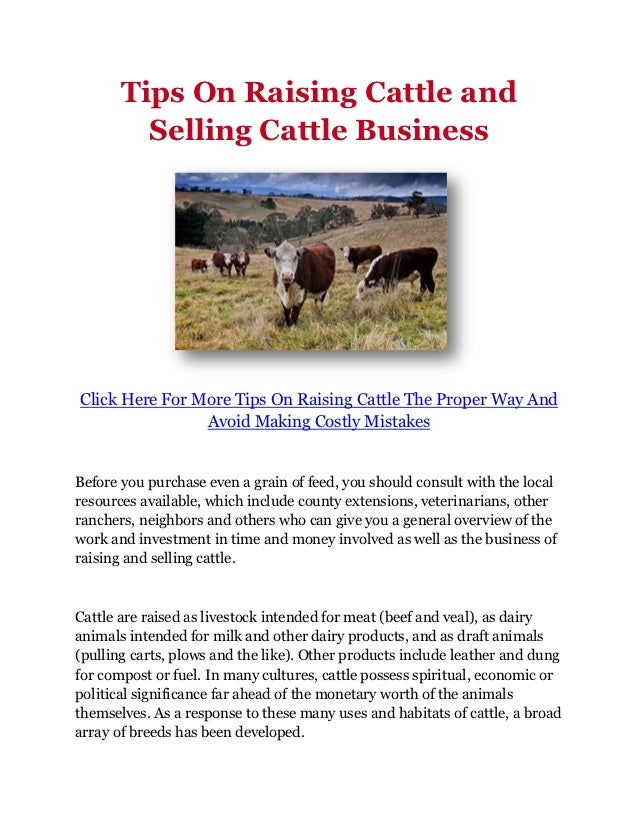 Tips On Raising Cattle and         Selling Cattle BusinessClick Here For More Tips On Raising Cattle The Proper Way And   ...