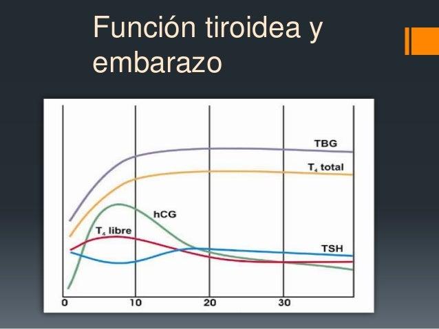 Función tiroidea yembarazo