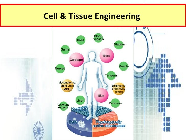 Cell &  Tissue Engineering