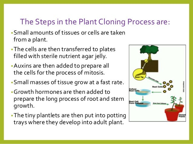 understanding what a clone is and the process of cloning Molecular cloning is a set of experimental methods in molecular biology that are used to assemble recombinant dna molecules and to direct their replication within host organisms.