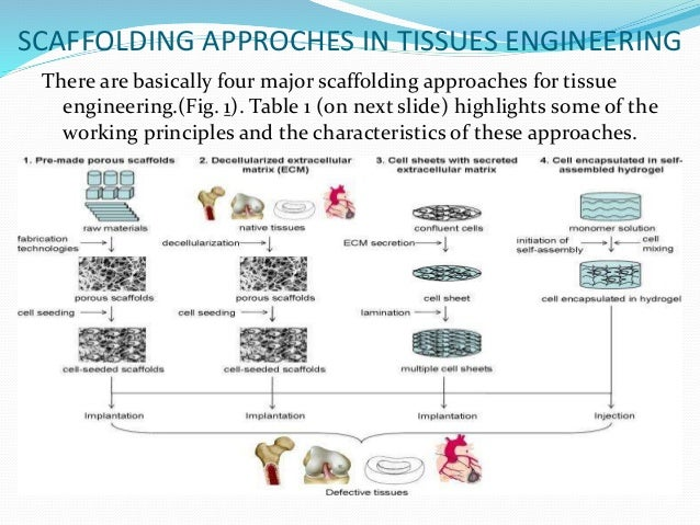Tissue Development With Tissue Engineering Approach