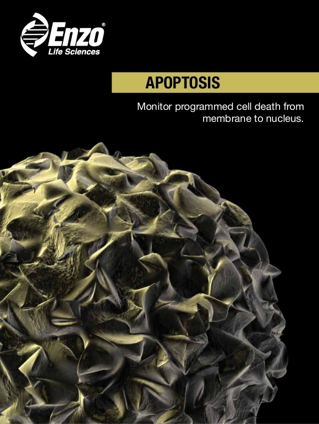 APOPTOSIS Monitor programmed cell death from membrane to nucleus.