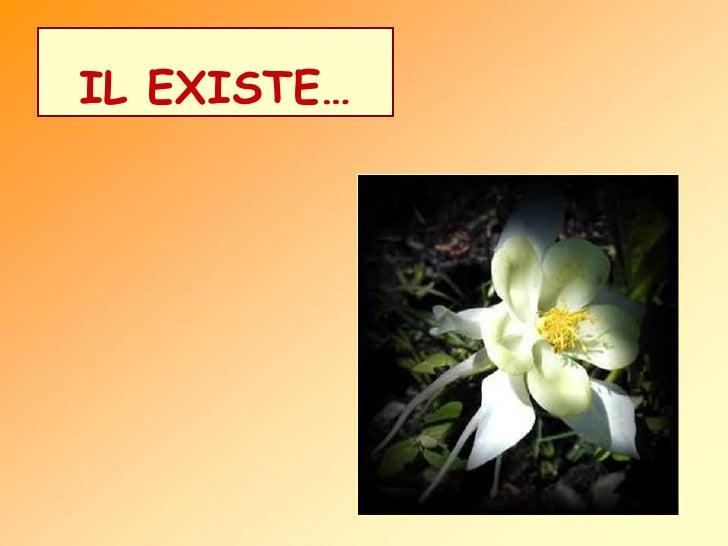 IL EXISTE…