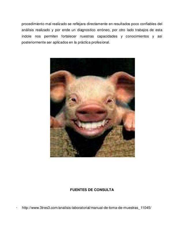 Toma de muestras en cerdos