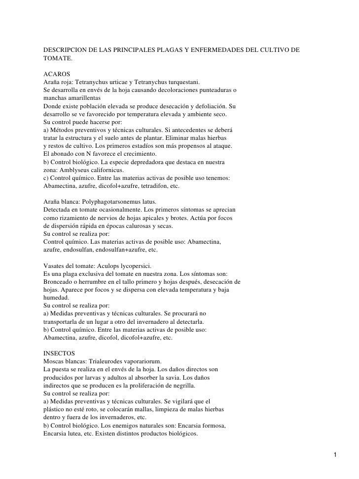 DESCRIPCION DE LAS PRINCIPALES PLAGAS Y ENFERMEDADES DEL CULTIVO DE TOMATE.  ACAROS Araña roja: Tetranychus urticae y Tetr...