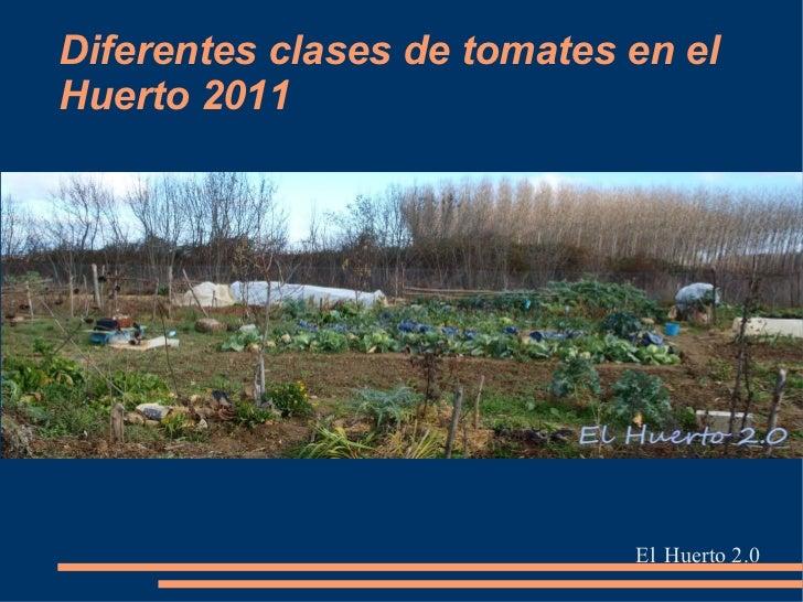 Diferentes clases de tomates en elHuerto 2011                             El Huerto 2.0