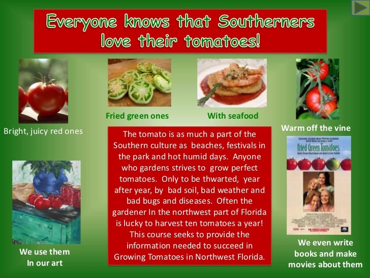 Everyone knows that Southerners <br />love their tomatoes!<br />With seafood<br />Fried green ones<br />Warm off the vine ...