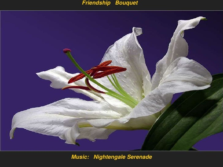 Friendship   Bouquet<br />Music:   Nightengale Serenade<br />