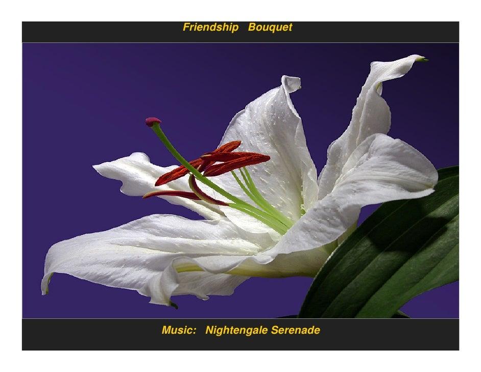 Friendship Bouquet     Music: Nightengale Serenade