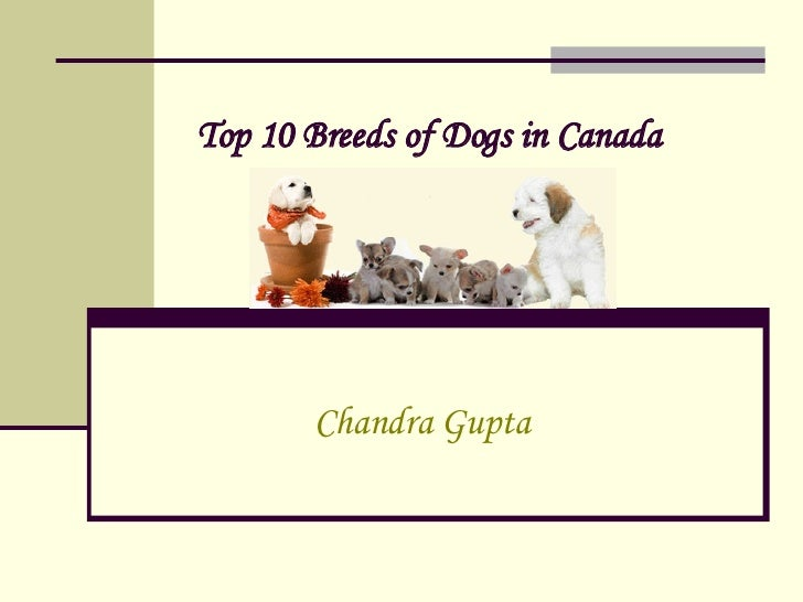 Top 10 Breeds of Dogs in Canada   Chandra Gupta