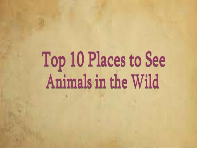 Top 10 Places to See Animals in the Wild