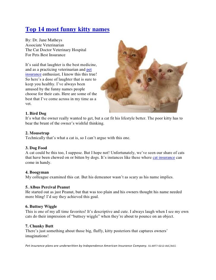 Top 14 most funny kitty names