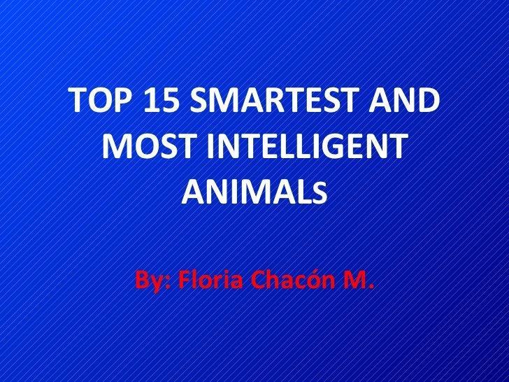 TOP 15 SMARTEST AND MOST INTELLIGENT ANIMAL S By: Floria Chacón M.