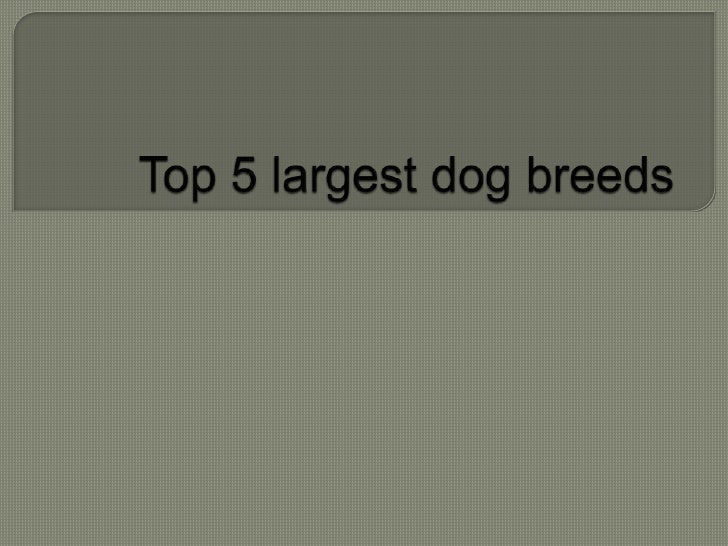 Top 5 largest dog breeds