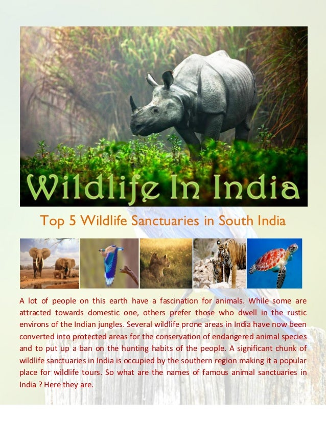 Top 5 Wildlife Sanctuaries in South IndiaA lot of people on this earth have a fascination for animals. While some areattra...