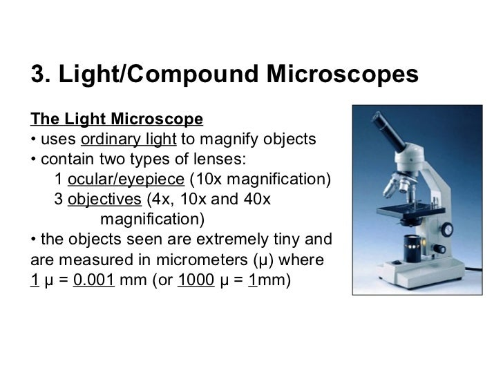 using a compound light microscope
