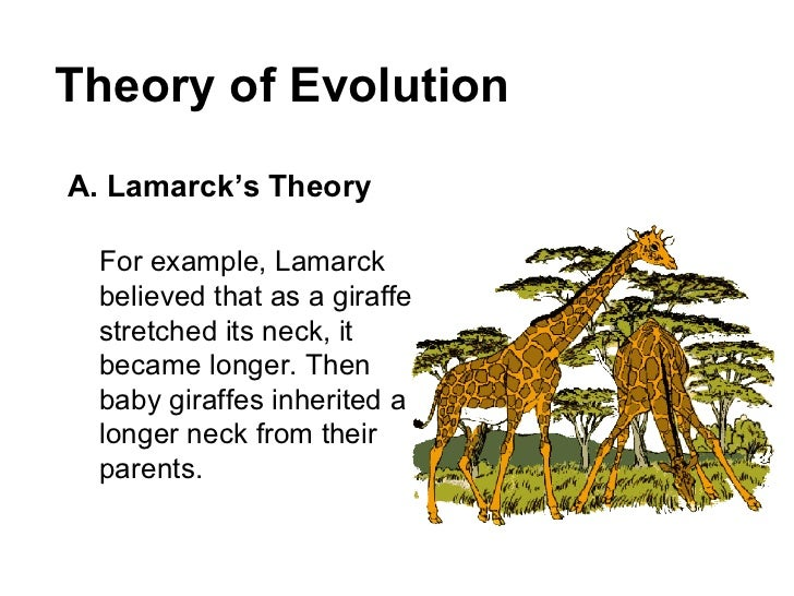 Theory of evolution essay