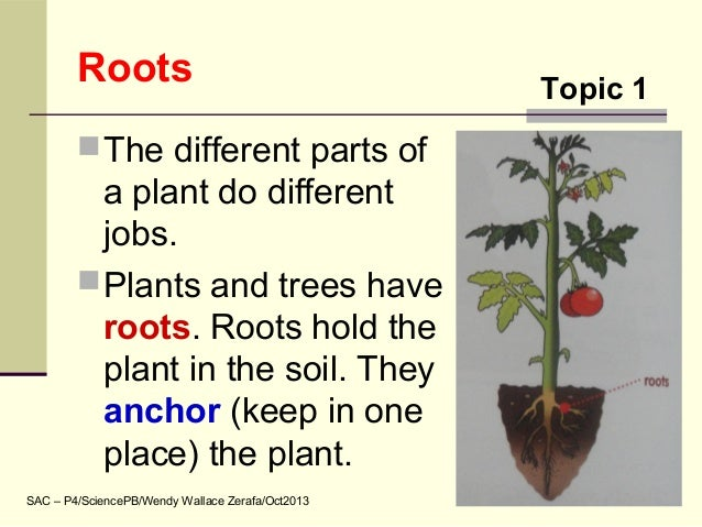 Science topic 01 plant parts roots and stems for Different parts of soil