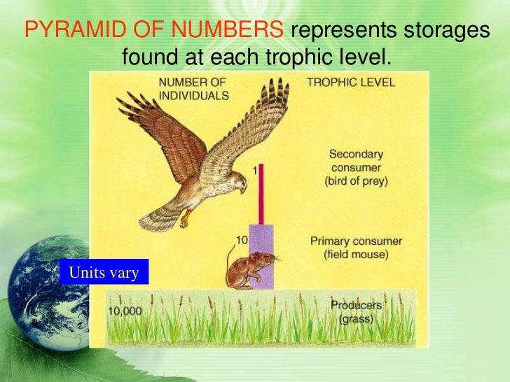 Grassland Secondary Consumers Secondary Consumers