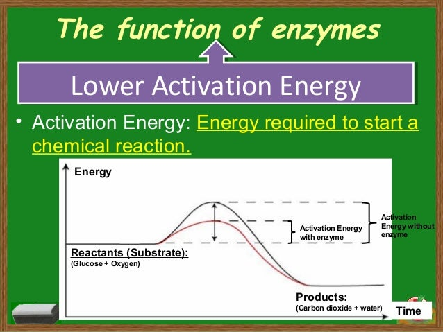 enzyme and heavy metals essay Free essay: biochemical pathways of heavy metals poisoning bio101 (principles of biology) 6 july 2012 abstract the biochemical pathways of heavy metal.