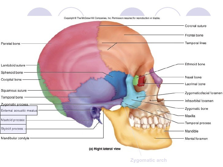 the projection of the temporal bone is the Iv the roentgen anatomy of the temporal bone, such as it appears in the projections employed the author must once more draw attention to the importance.