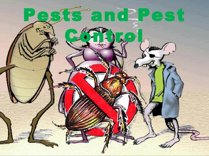 Top information about pest control – 2012