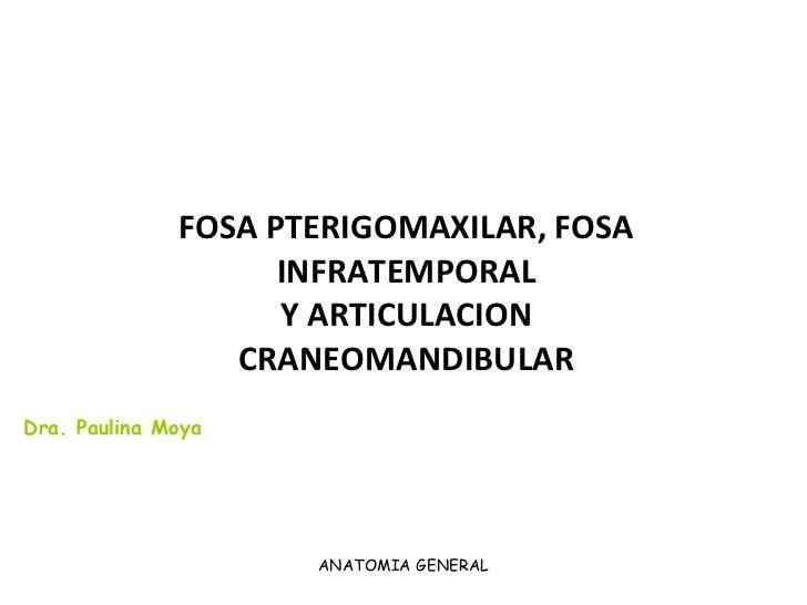 FOSA PTERIGOMAXILAR, FOSA INFRATEMPORAL Y ARTICULACION CRANEOMANDIBULAR ANATOMIA GENERAL Dra. Paulina Moya