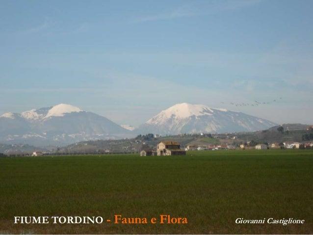 FIUME TORDINO - Fauna e Flora Giovanni Castiglione