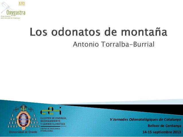 Antonio Torralba-Burrial  V Jornades Odonatològiques de Catalunya  Bellver de Cerdanya 14-15 septiembre 2013