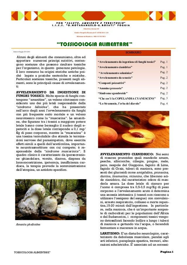 """Avvelenamento da ingestione di funghi tossici"" Pag. 1""Avvelenamento cianidrico"" Pag. 1""Avvelenamento solaninico"" Pag. 2""A..."