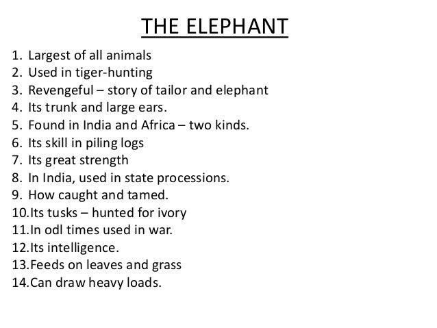 of elephant