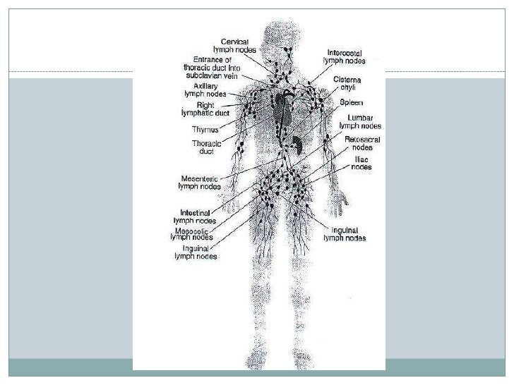 What are the 5 lymphatic tissues in the body?