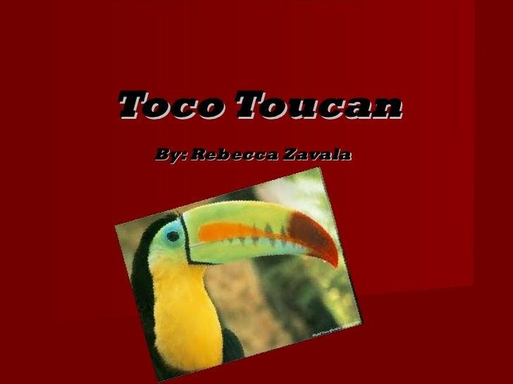 Toco Toucan By: Rebecca Zavala