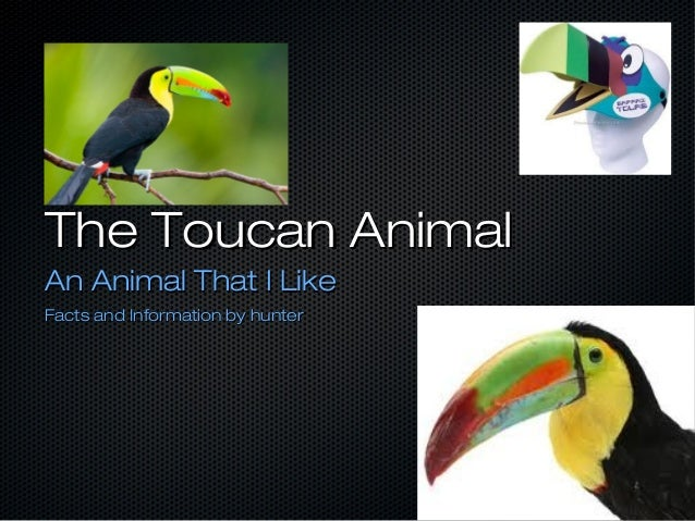 The Toucan Animal An Animal That I Like Facts and Information by hunter