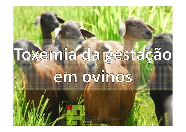 Toxemia da gestação em ovinos