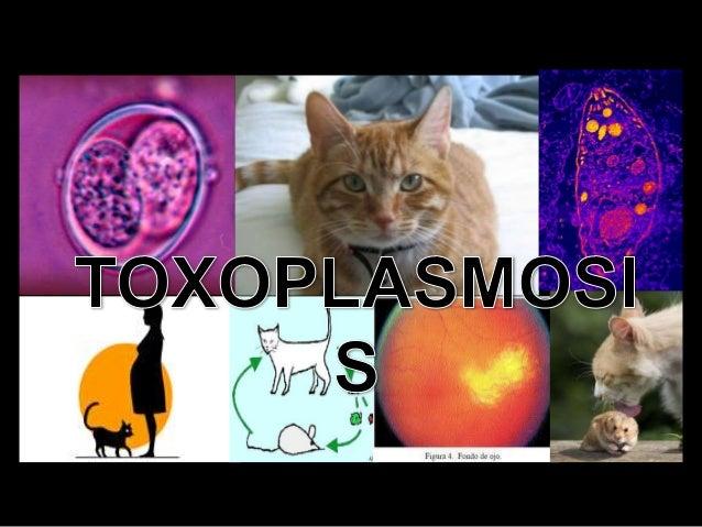 La Toxoplasmosis es causada por un parasito Toxoplasma gondii, protozoario intracelular obligado, el cual causa una enferm...