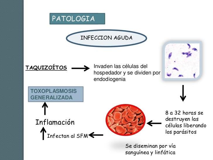 Los medios públicos de la deducción del organismo de los parásitos
