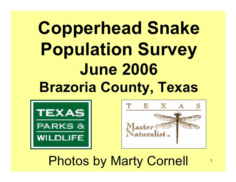 Copperhead Snake Population Survey       June 2006 Brazoria County, Texas      Photos by Marty Cornell   1