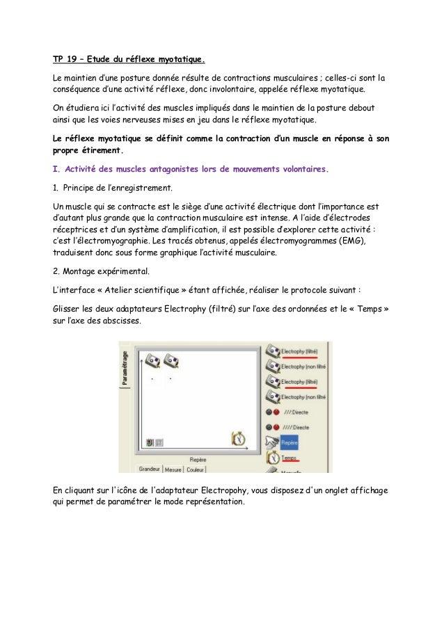 Tp 19 Etude du réflexe myotatique.