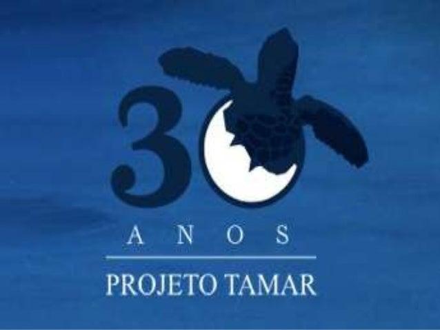 """Protejo TAMAR   Foi criado em 1980   O nome """"Tamar"""" foi criado a partir da combinação  das sílabas iniciais das  palavra..."""