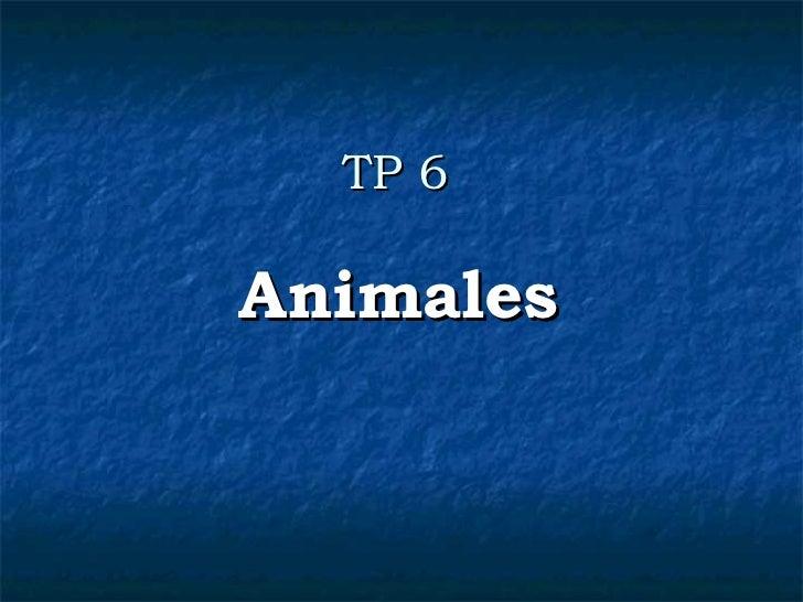 TP 6 Animales